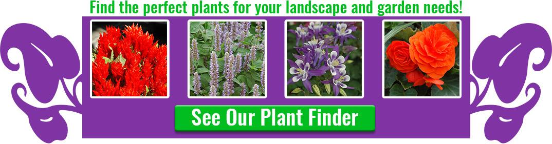 plant-finder-button