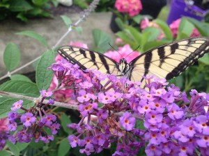 Spring Open House! @ Plumline Nursery  | Murrysville | Pennsylvania | United States