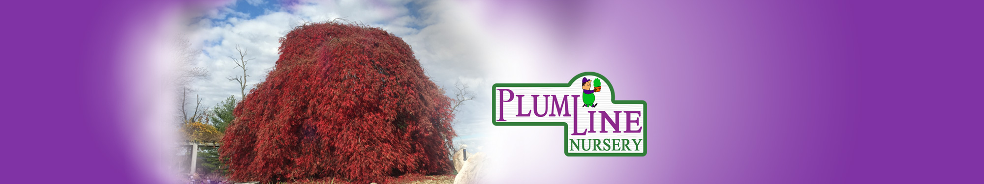 red-tree-banner-1
