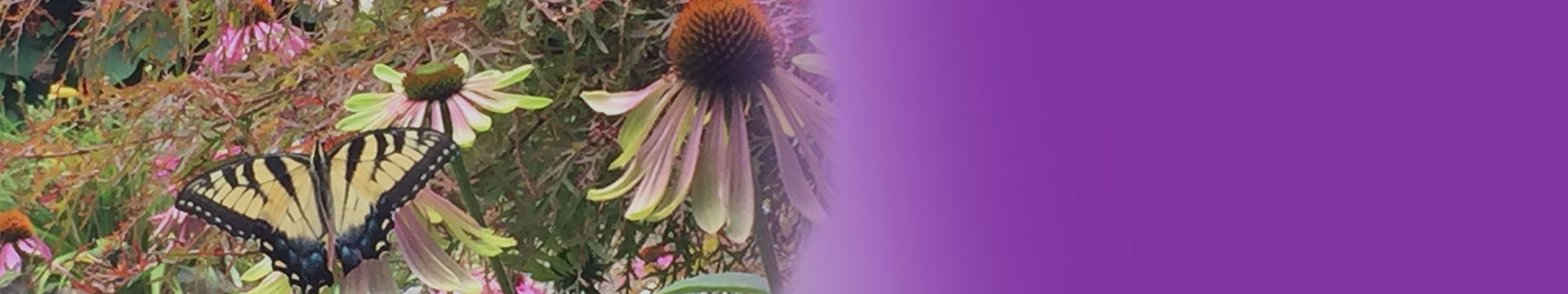 sunflower-butterfly-plants-murrysville-1